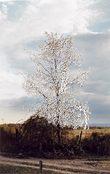 fotografia di un albero grattata e tagliata in corrispondenza dei rami a formare dei fiori con i pezzetti di carta