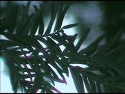 fronda di albero