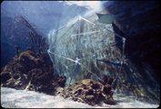 struttura geometrica formata da listelli sottili immersa nella vasca di un grande acquario