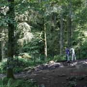 due persone nel bosco