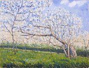 prato verde con alberi in fiore