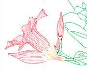 disegno a pennarello di un fiore rosa