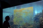 una persona davanti al vetro di un grande acquario che ha un rettangolo sporco di alghe
